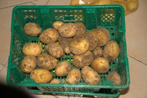 """Kartoffel """"Quarta"""""""
