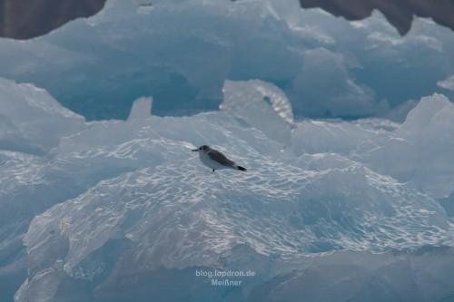 Weiter Eisbergtaxi fahren oder doch selber fliegen das ist hier die Frage!