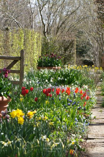 Im Sommer und Herbst wandelt man hier unter Linden, Jetzt bestimmen die Tulpen die Farbe.