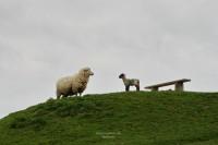 Mitbewohner auf der Farm.